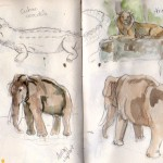 zoo sketches 2
