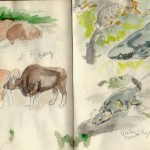 zoo sketches 3