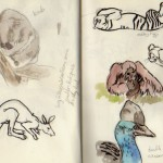 zoo sketches 5