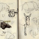 zoo sketches 6