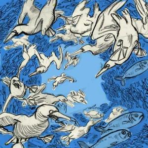 gannet sardine swarm sketch