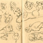 lion sketches