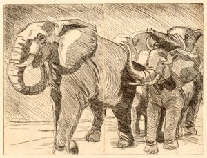 elephants etching