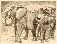 Elephant etching